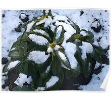 Snowy Cloak Poster