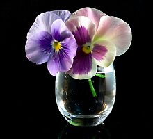 Pansy Duo by Tom Newman