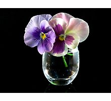 Pansy Duo Photographic Print