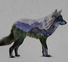 Mountain Wolf by kiddruba