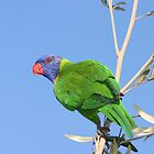 Rainbow Lorikeet by Jade Welch