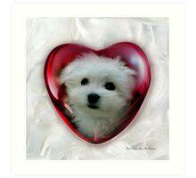 Hermes the Maltese - Little Sweet Heart ! Art Print