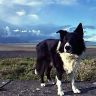 Indy at the beach by Michael Haslam
