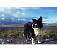 Indy at the beach Photographic Print
