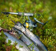 Three trout by JH-Image