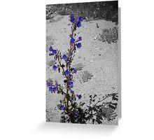 Pruple Desert Flower Greeting Card