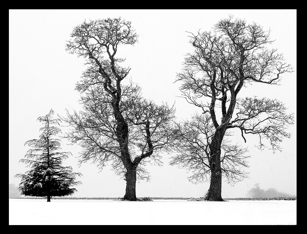 Three Trees in the Norfolk snow - black & white by johnny2sheds