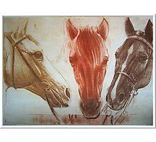 """Three good friends"" Photographic Print"