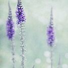 Pastel Flowers by Svetlana Sewell