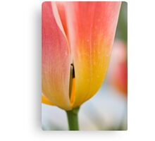 Anatomy of a Tulip = The Slip Canvas Print