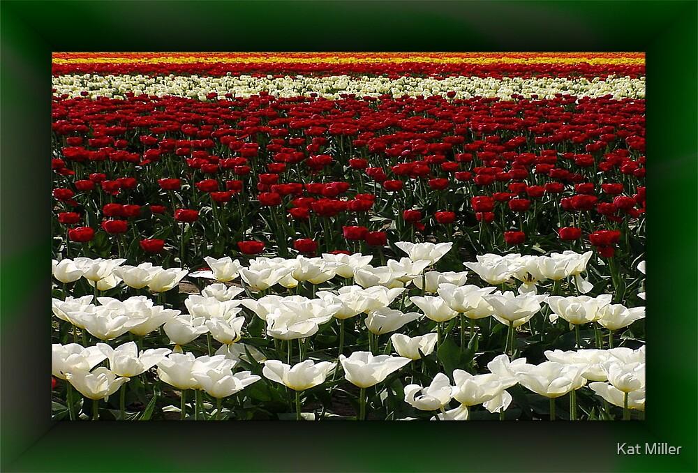 Tulips Forever by Kat Miller