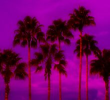 Palm Tree Heaven by Kenneth Krolikowski