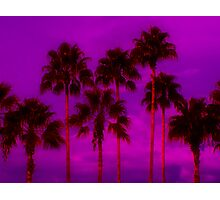 Palm Tree Heaven Photographic Print