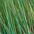 Wetland Grass by Paul Mears