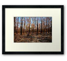 Blackened trees and bushland after bushfire Framed Print