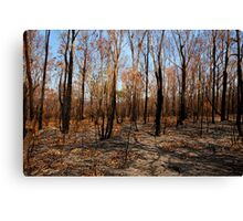 Blackened trees and bushland after bushfire Canvas Print