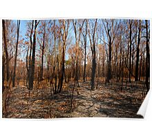 Blackened trees and bushland after bushfire Poster