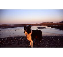 Magic hour with Indy Photographic Print