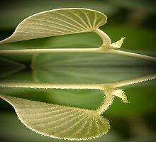 Leaf Reflection by chrissy53