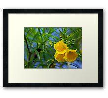 Yellow on Green Framed Print