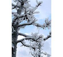 Freezing Tree Photographic Print