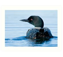 Common Loon - Mississippi Lake, Ontario Art Print