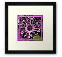 Only Because..It's Purple Spring Framed Print