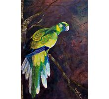 Outback Ringneck Photographic Print
