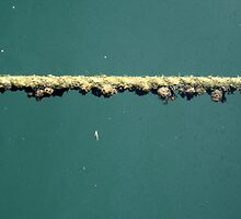 Water Rope with Barnacles #2 by MrsO