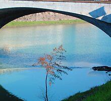 Tree under the bridge by jerry  alcantara