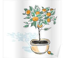 Citrus tree in a pot Poster