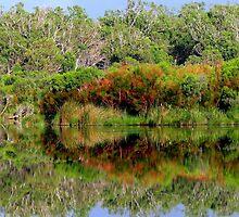 Forest Reflection 2 by Lynda Kerr