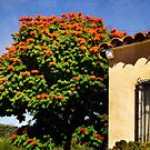 Flamboyant tree by Celeste Mookherjee