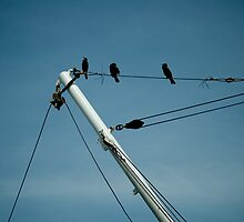 birds on a wire by Yorrik