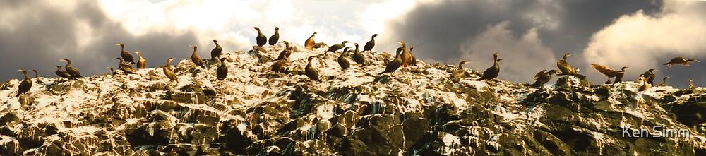 Cormorants by Kenart