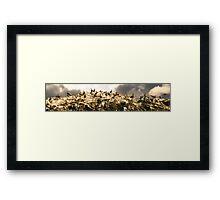 Cormorants Framed Print