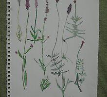 Lavender watercolour by samhain