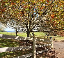 Landsc ape in the Autumn Fall by Leah-Anne Thompson