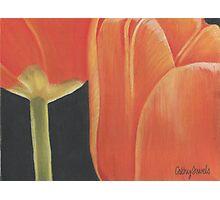 orange tulips Photographic Print