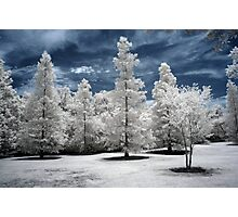 Trees (Infrared) Photographic Print