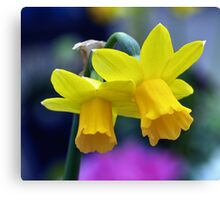 Two lone Daffodil's Canvas Print