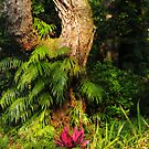 Woodland Morning by Rebecca Cruz