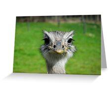 bigbird Greeting Card