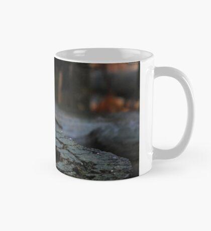Black-capped Chickadee eating seed Mug