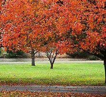 Bradford pears in autumn by AndrewBlake