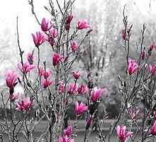 Tulip tree in bloom by AndrewBlake