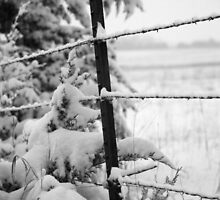 Snow on the fence by AndrewBlake