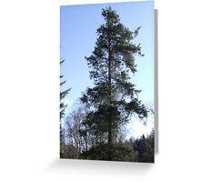 Big Fir Tree Greeting Card