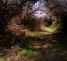 Walking path under trees by Stacy Colean