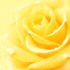 Lemon Yellow Rose by Corinne Noon